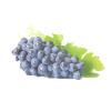 Виноград изабелла