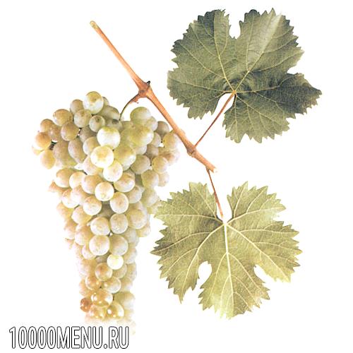 Виноград ркацителі